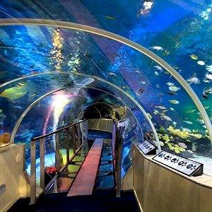 The London Aquarium